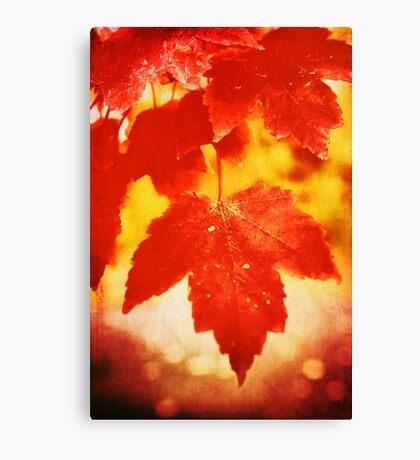 Flaming Autumn Canvas Print