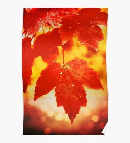 Flaming Autumn Poster