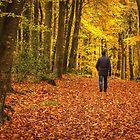 Autumn Walk by Derek Smyth