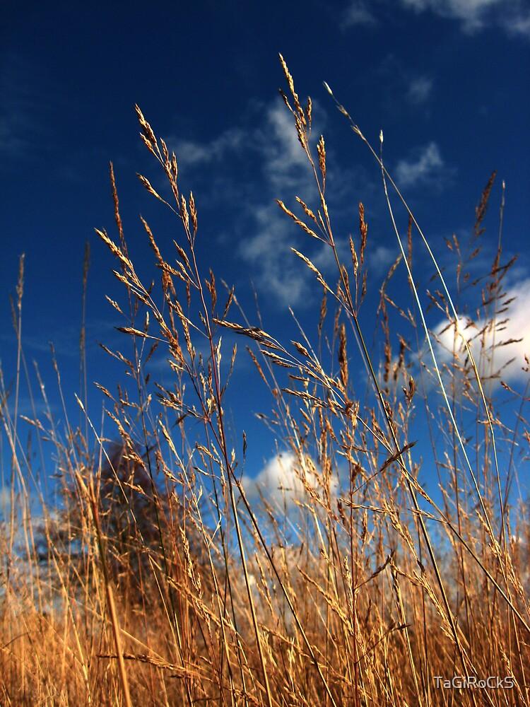 Swaying Reeds by TaGiRoCkS