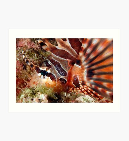 Zebra Lionfish Art Print