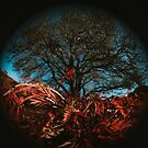 Fisheye Tree by Rubyheart