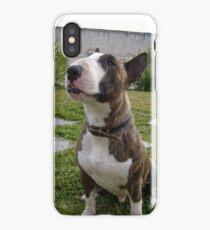 bull terrier brindle sitting iPhone Case/Skin