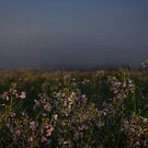 Foggy Wildflowers by Rubyheart