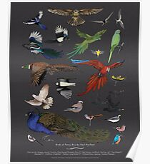 Birds of Pansy Boy by Paul Harfleet. Poster