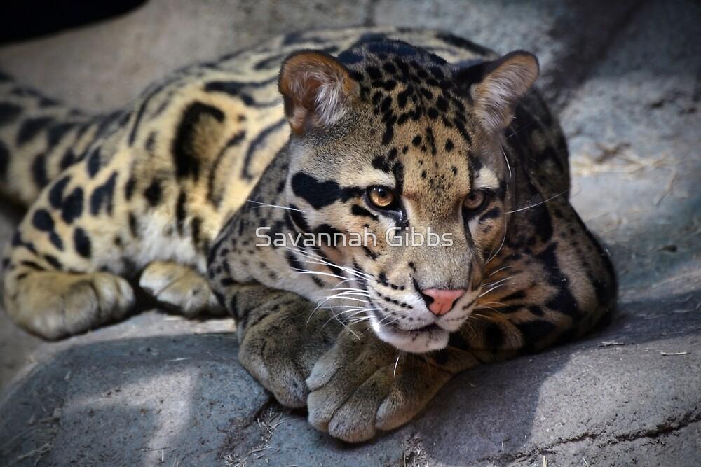 Clouded Leopard by Savannah Gibbs