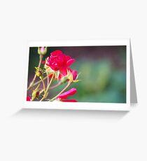 Fuchsia Rose  Greeting Card