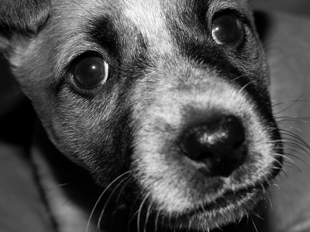 Stella's Eyes by Jenni77