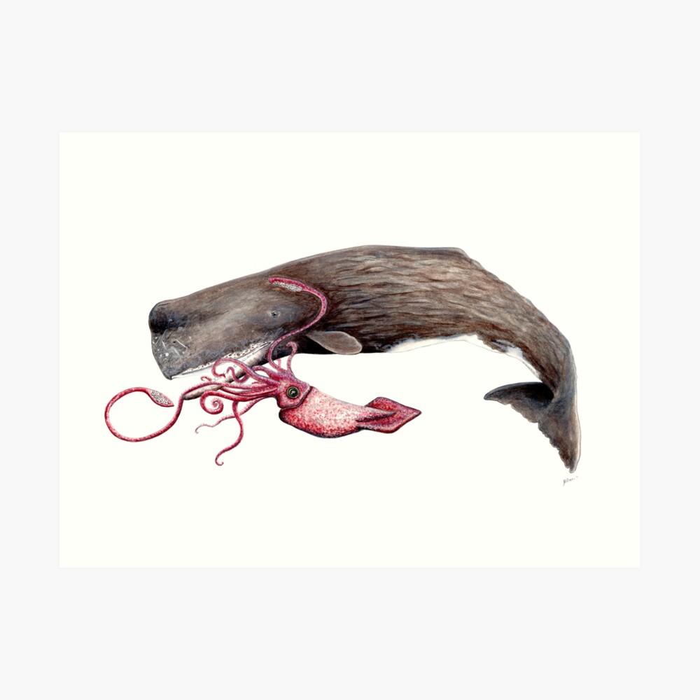 Batalla de cachalote y calamar Lámina artística