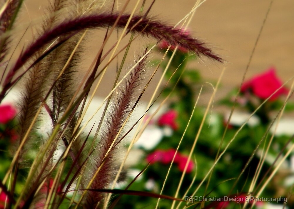 Flowers In The Background by R&PChristianDesign &Photography