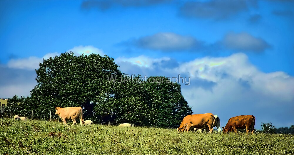 Grazing  by WJPhotography