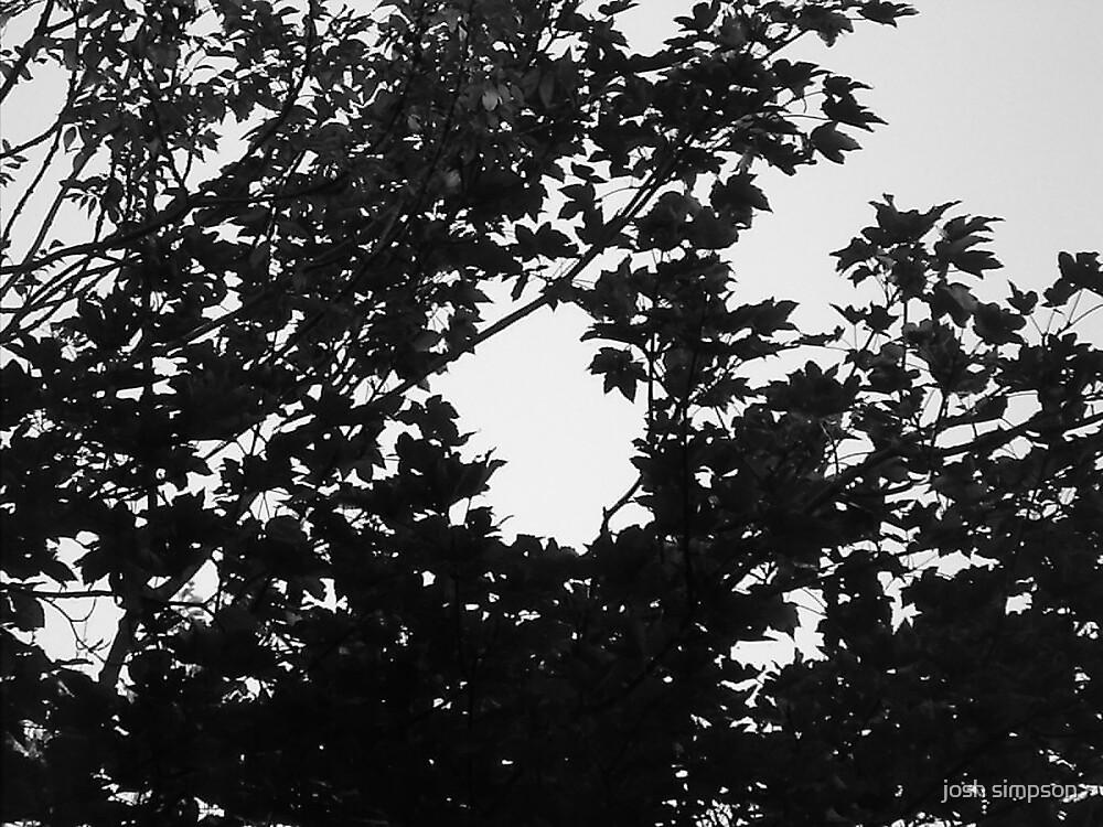 leaves by josh simpson