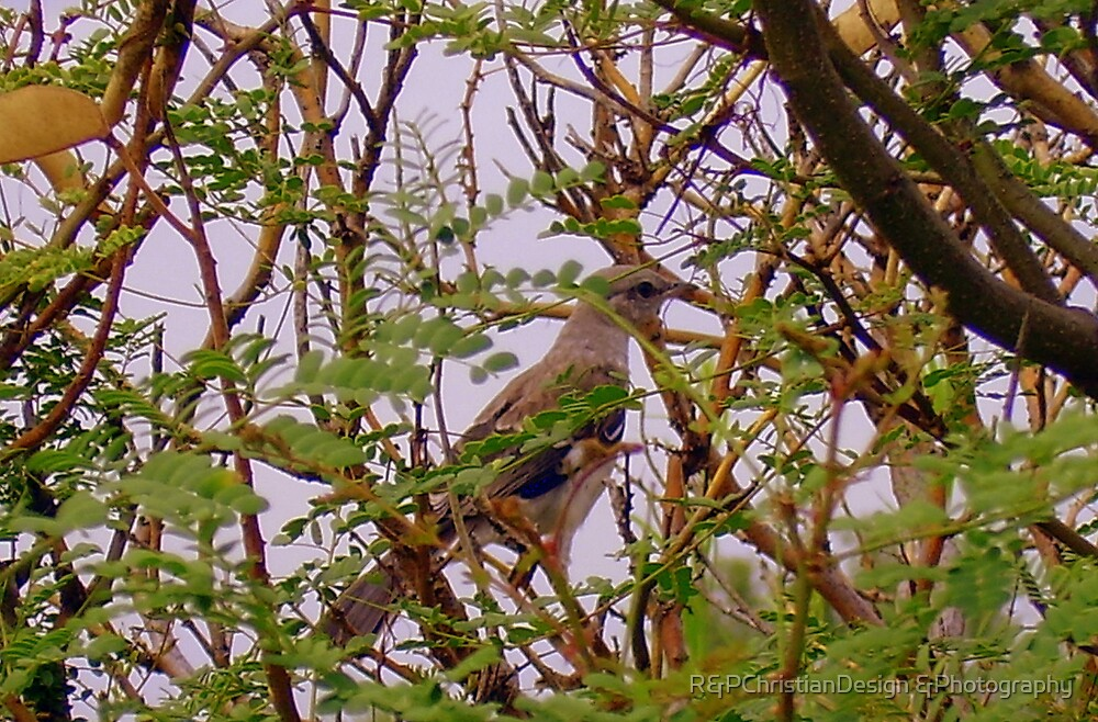 Bird In A  Tree by R&PChristianDesign &Photography