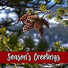 Western White Pine Holiday Card by Jared Manninen