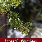 Lodgepole Pine Holiday Card by Jared Manninen