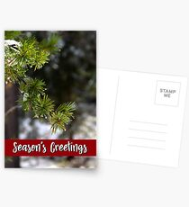 Lodgepole Pine Holiday Card Postcards
