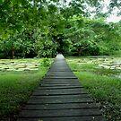 Walking Trough nature by Carlos Neto