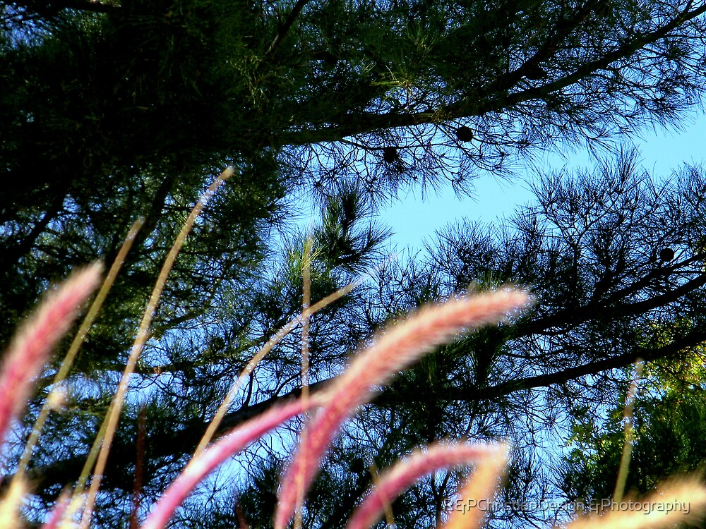Blue Sky Above by R&PChristianDesign &Photography