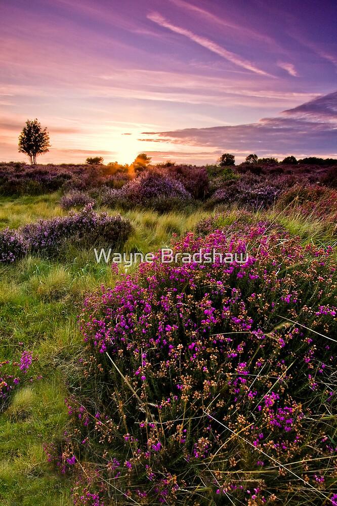 Dunwich Heath 2. by Wayne Bradshaw