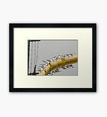 Forster's Tern Hangout Framed Print
