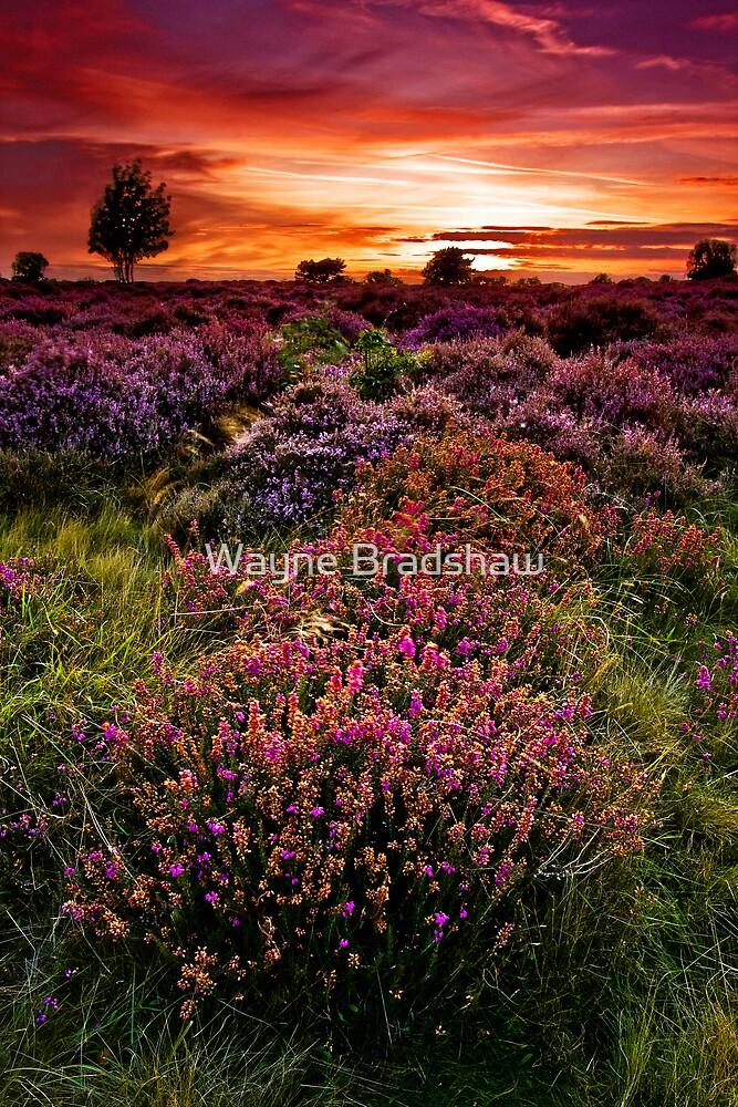 Dunwich Heath 3. by Wayne Bradshaw