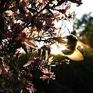 Bee Blur by Tammy F
