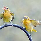 Oriole Fledglings by Laurie Minor