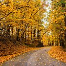 Fall Road by kalimorganphoto