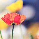 Garden Beauty by Beata  Czyzowska Young