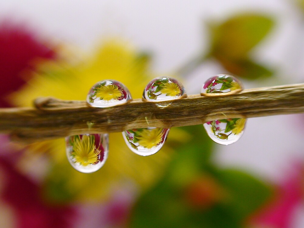 Yellow flower water droplets by len Janes