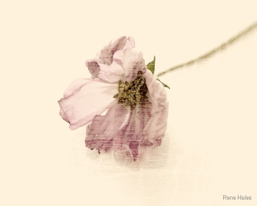 Objects: floral by Rene Hales