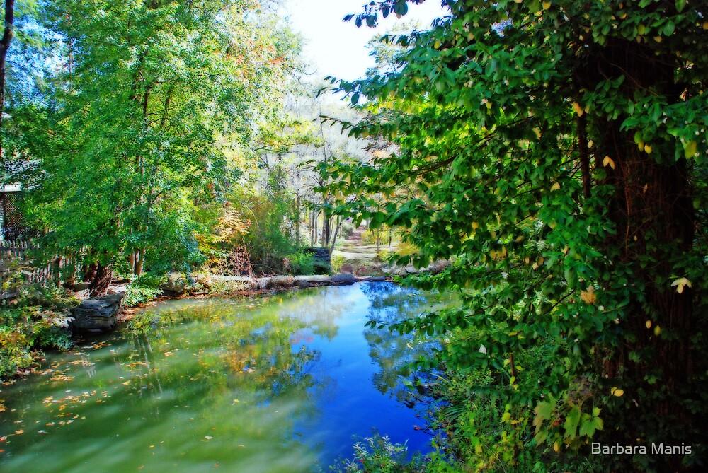 Running Brook by Barbara Manis