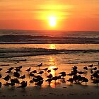 Morning Sun by Mary Kaderabek-Aleckson