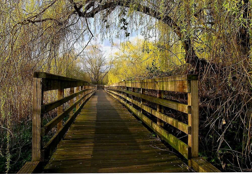 Boardwalk by Corey Bigler