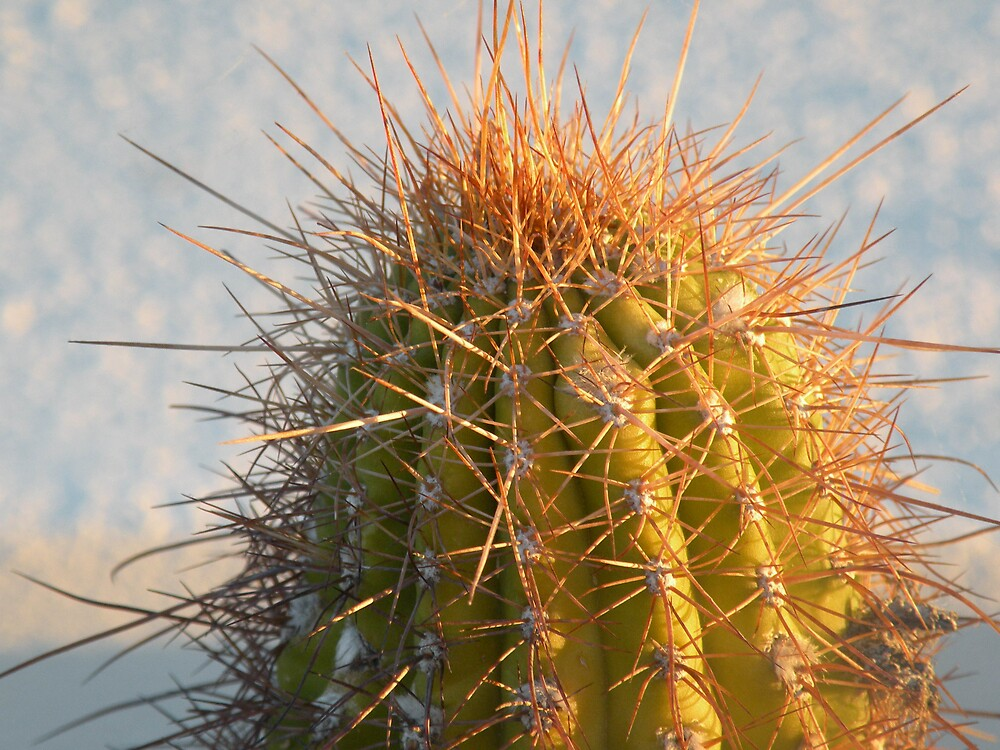 Have a prickly day !! ;-) by Bonnie Pelton