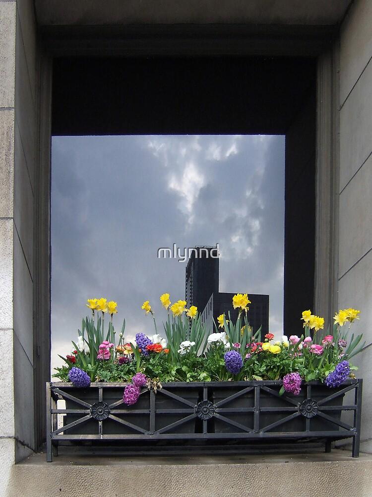WINDOW DRESSING, CHICAGO STYLE by mlynnd