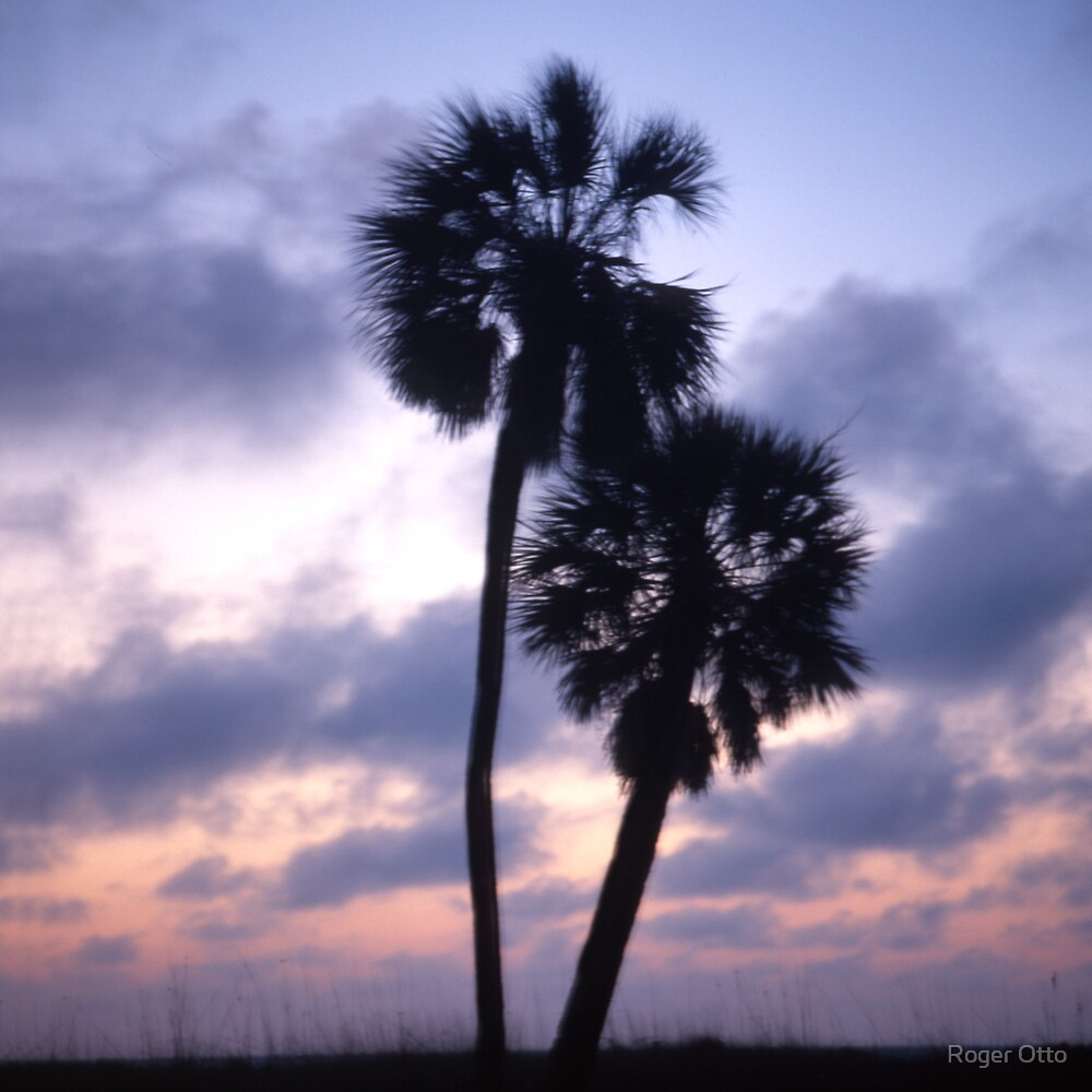 Two Palm Trees by Roger Otto
