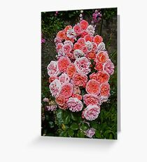 Roses in Blarney Castle Gardens Greeting Card