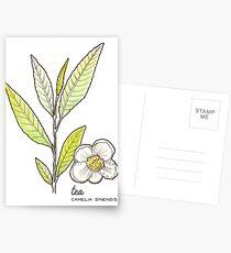 Tea series: Tea plant Postcards