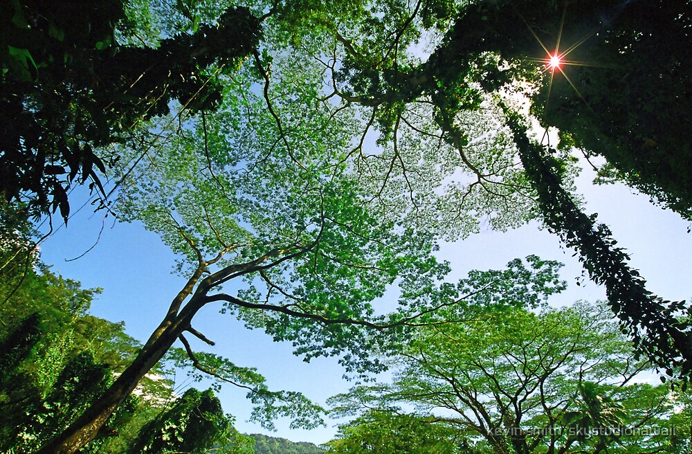 Manoa Falls Trail Canopy by kevin smith  skystudiohawaii