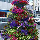 Street Flowers, Limerick by Margaret  Hyde