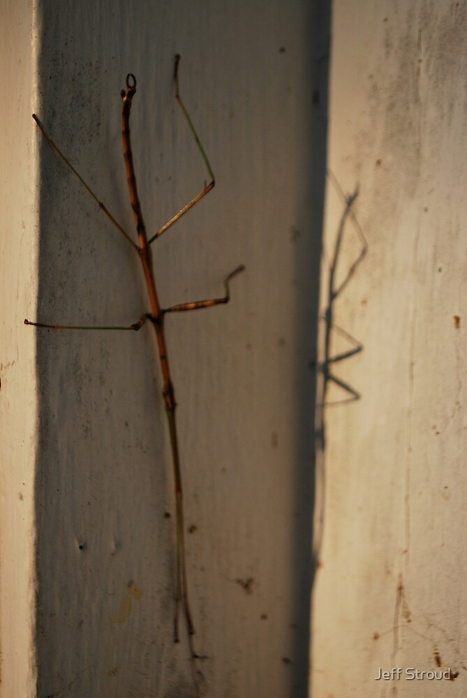 stick bug by Jeff stroud