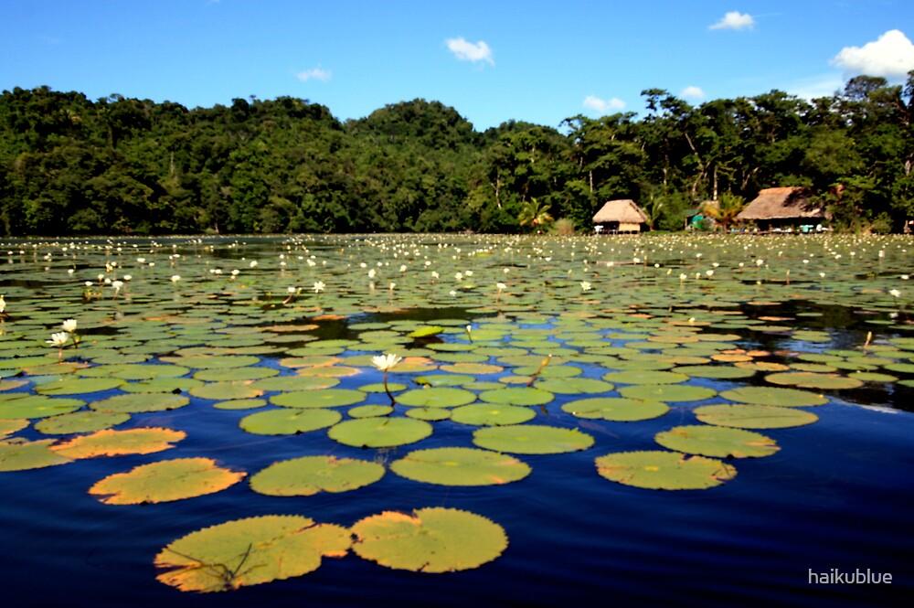 Water Lillies by haikublue