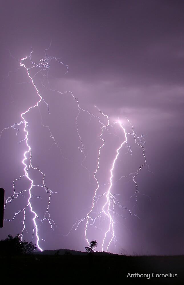 Rosewood Lightning by Anthony Cornelius