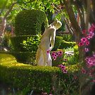 In the Garden by Barbara  Brown