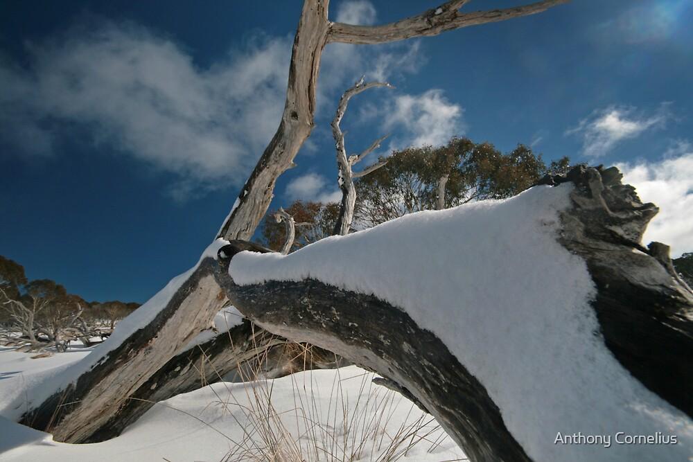 Snow Tree by Anthony Cornelius