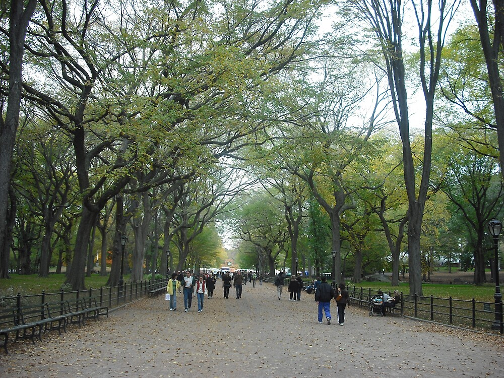 Central Park by erinpasslow