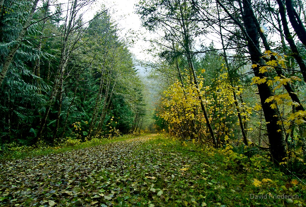A Road Less Travelled by David Friederich