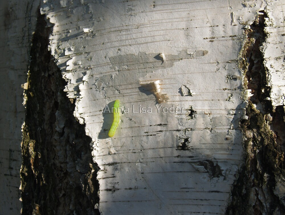 Paper Birch with Inchworm by Anna Lisa Yoder