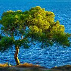 Lone Tree and Sea  by Ralph Goldsmith